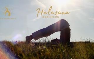 Halasana - der Pflug - Das Bewegte Haus Halle