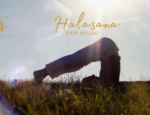 Halasana – der Pflug